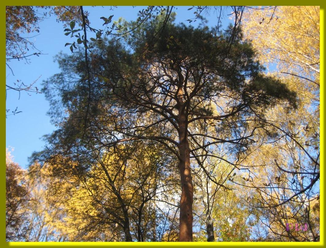 Усадьба Кусково - прогулка по осеннему парку 10