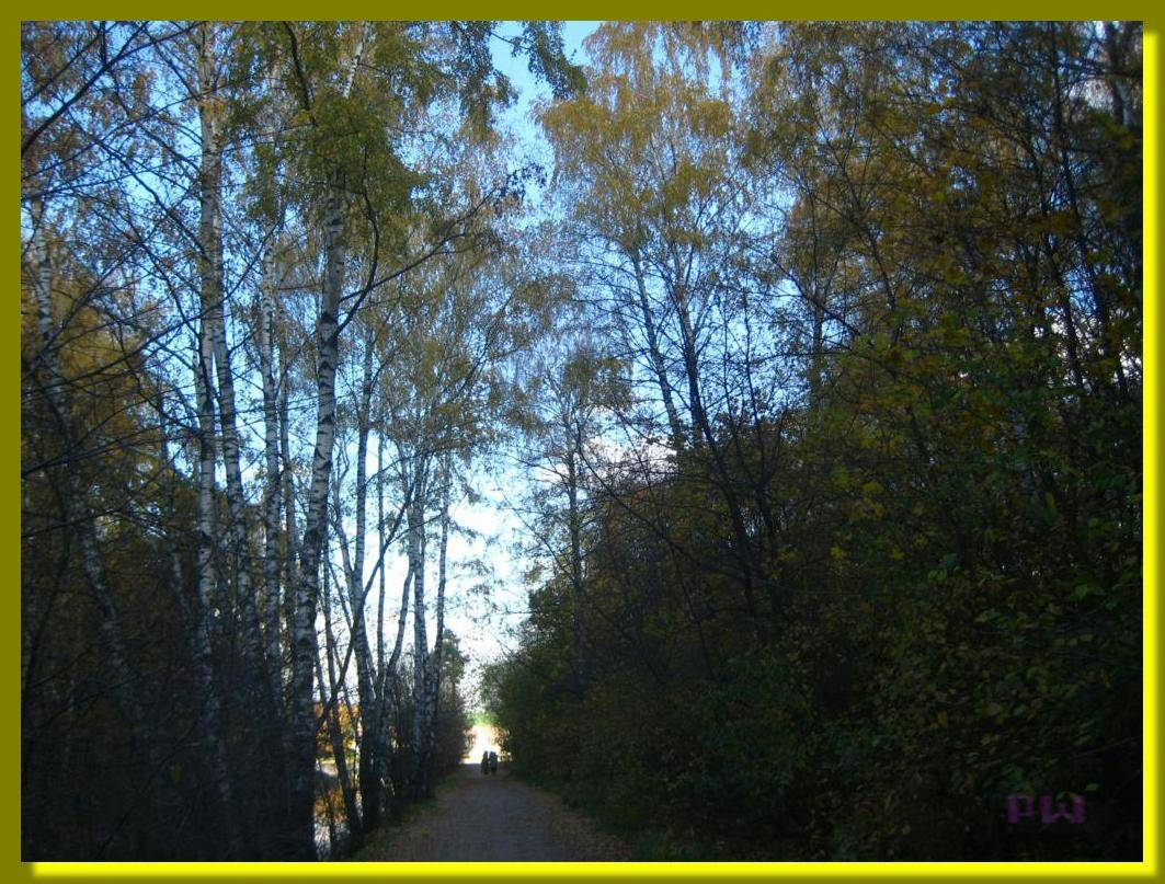 Усадьба Кусково - прогулка по осеннему парку