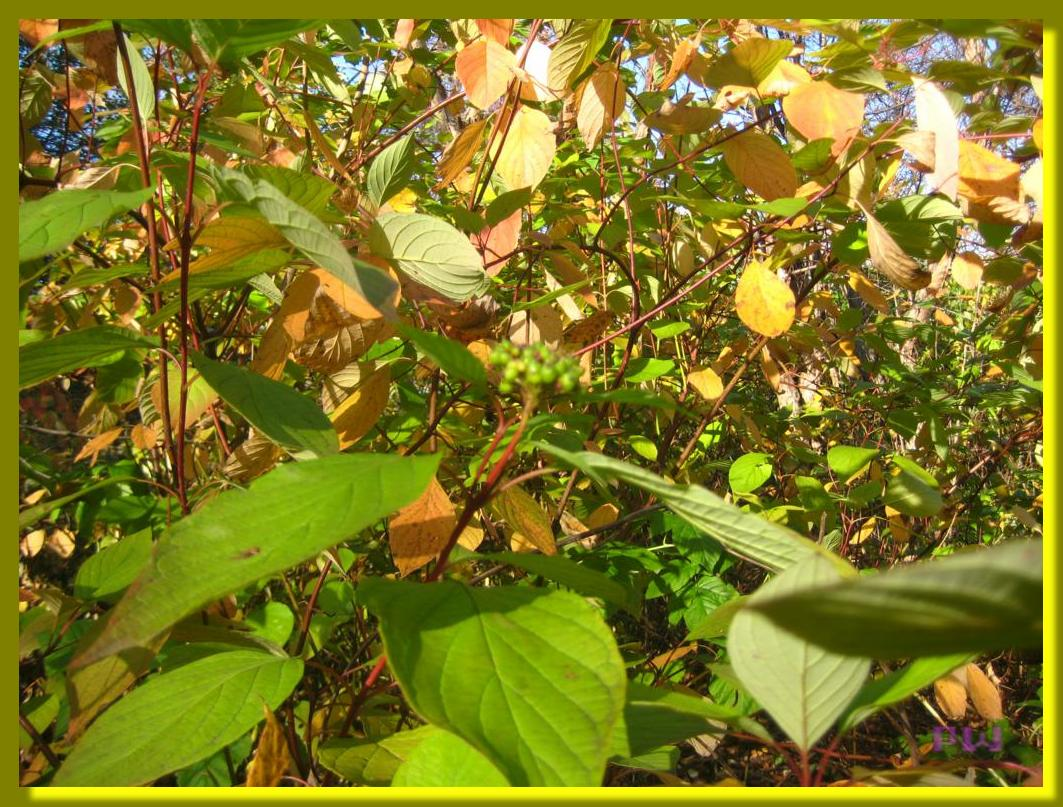 Усадьба Кусково - осенний цвет
