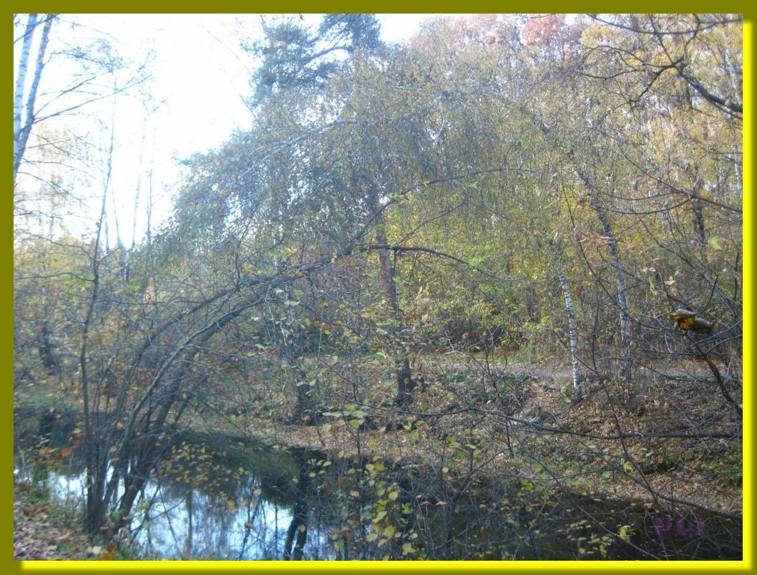 Усадьба Кусково - прогулка по осеннему парку 2