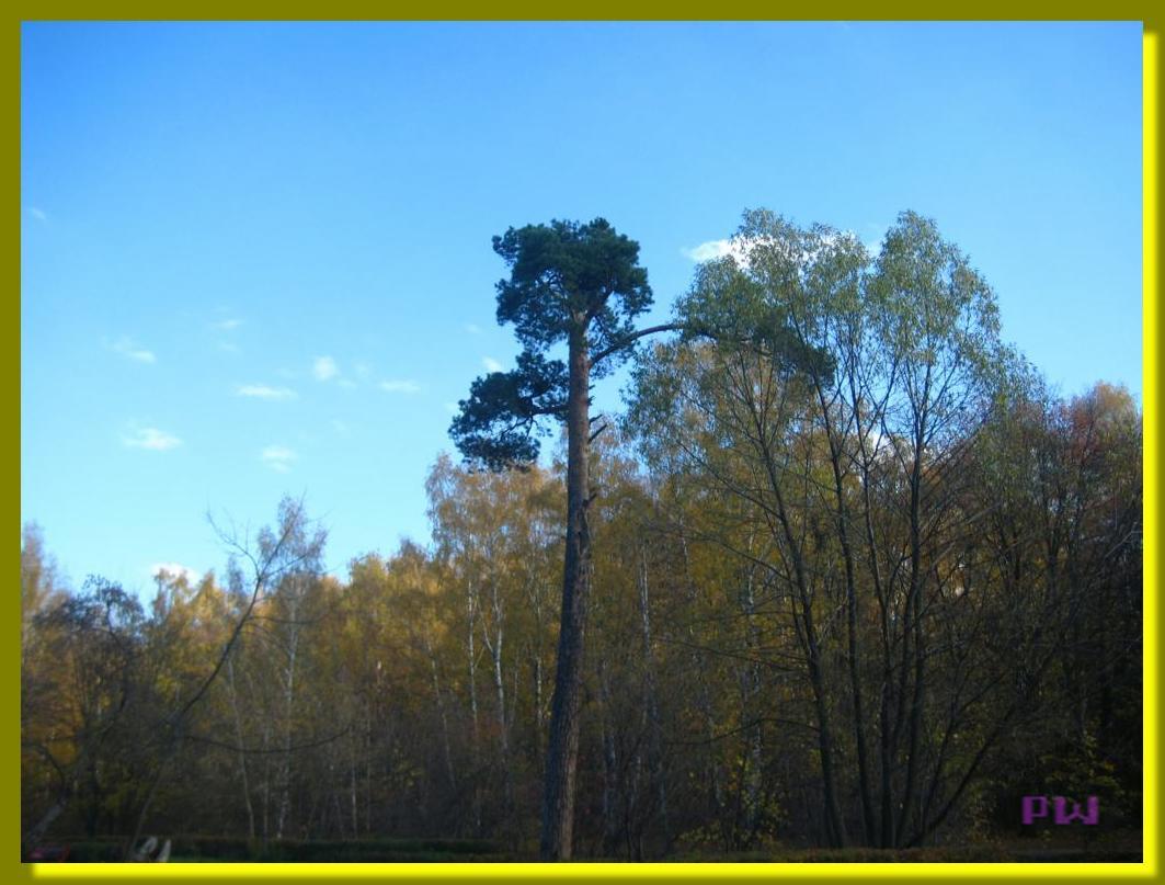 Усадьба Кусково - прогулка по осеннему парку 7