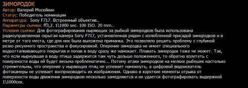 Зимородок. Фото Валерия Масейкина