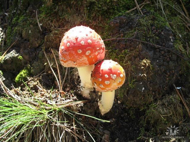 Эти грибочки не едят