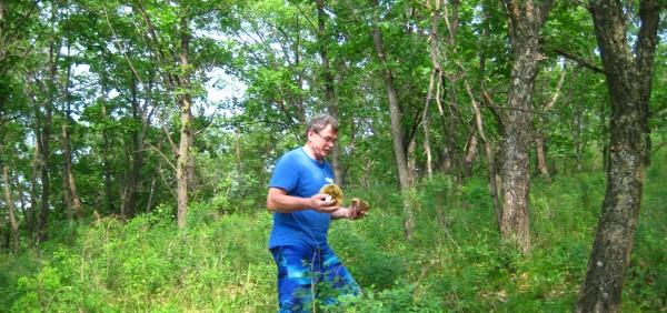 В Амурской области растут белые грибы