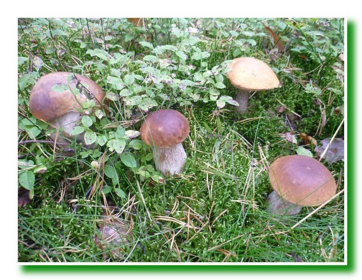 Осеннее грибное очарование (36)0