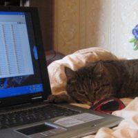 Чистота кошки – залог её здоровья