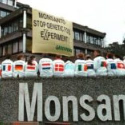 Кооперативы мелких фермеров США против ГМО продуктов