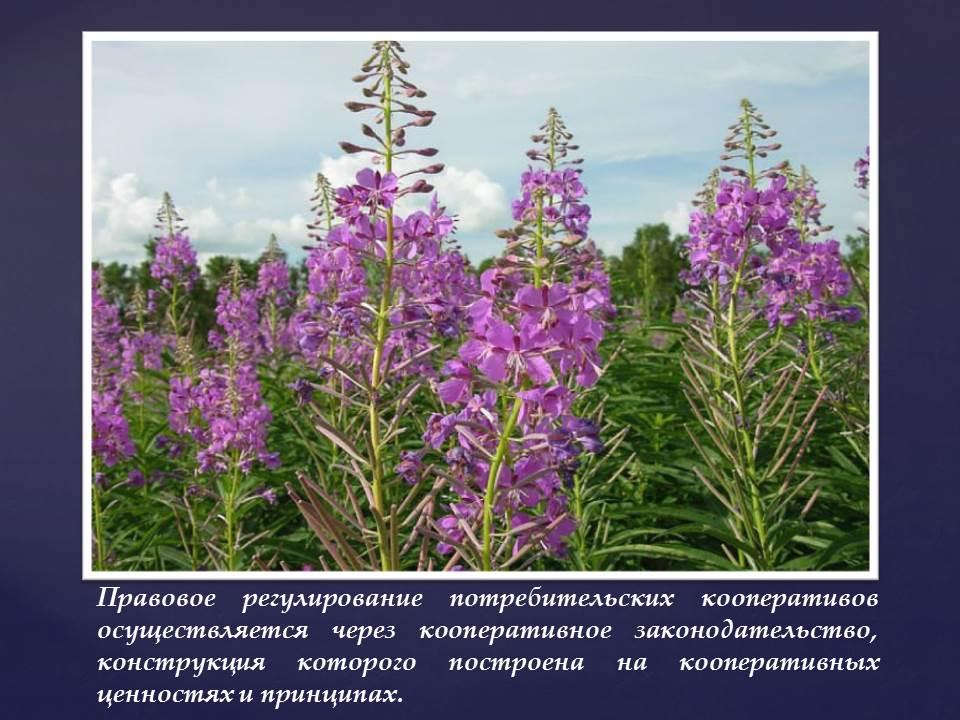 Российское кооперативное законодательство строится на кооперативных ценностях и принципах