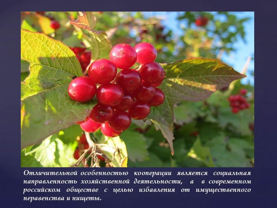 Связь кооперативных ценностей и принципов с формированием современного российского законодательства