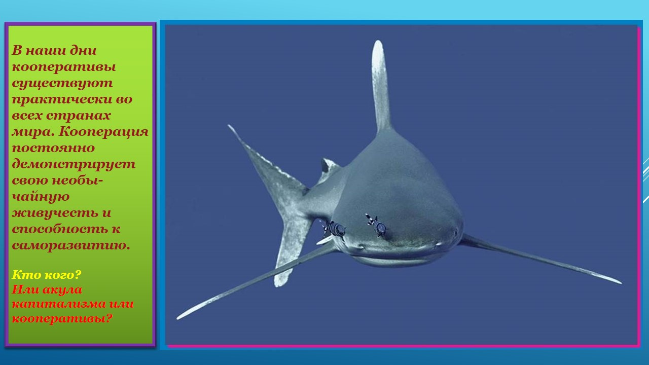 Кто кого или акулы капитализма или кооперативы
