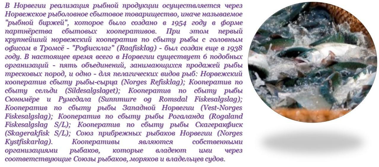 Рыбные торгово-сбытовые кооперативы Норвегии