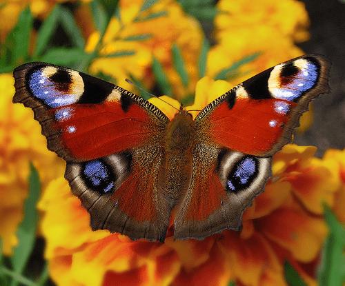 Бабочки в нашей жизни удивляют
