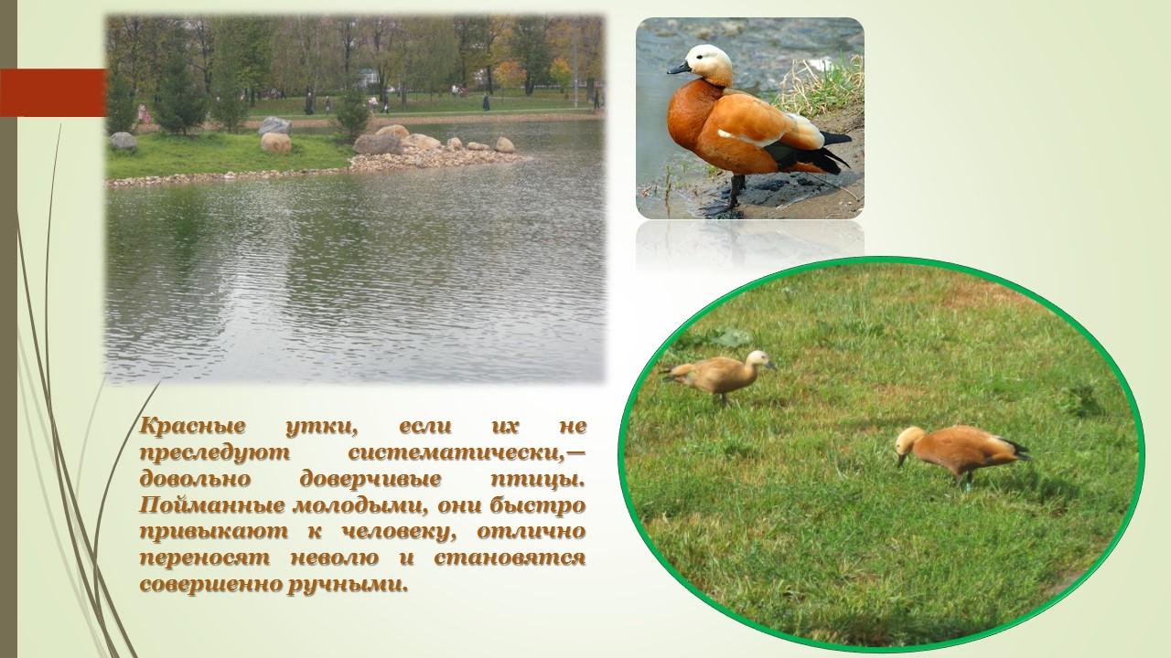 Огари на Ангарских прудах в Москве