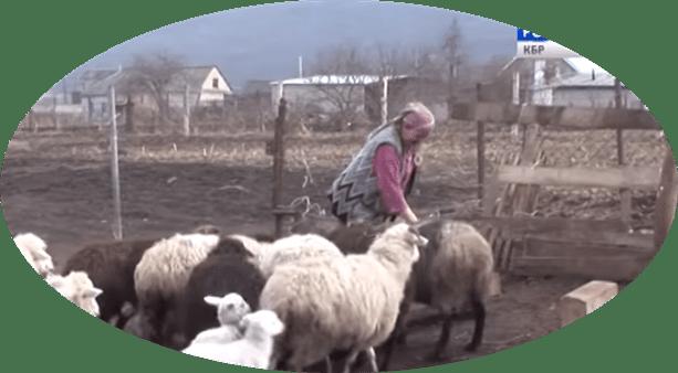 Животоноводство в КБР