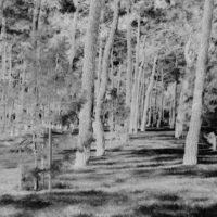 Крестьяне-лесорубы Северного края и организация «Северолес»