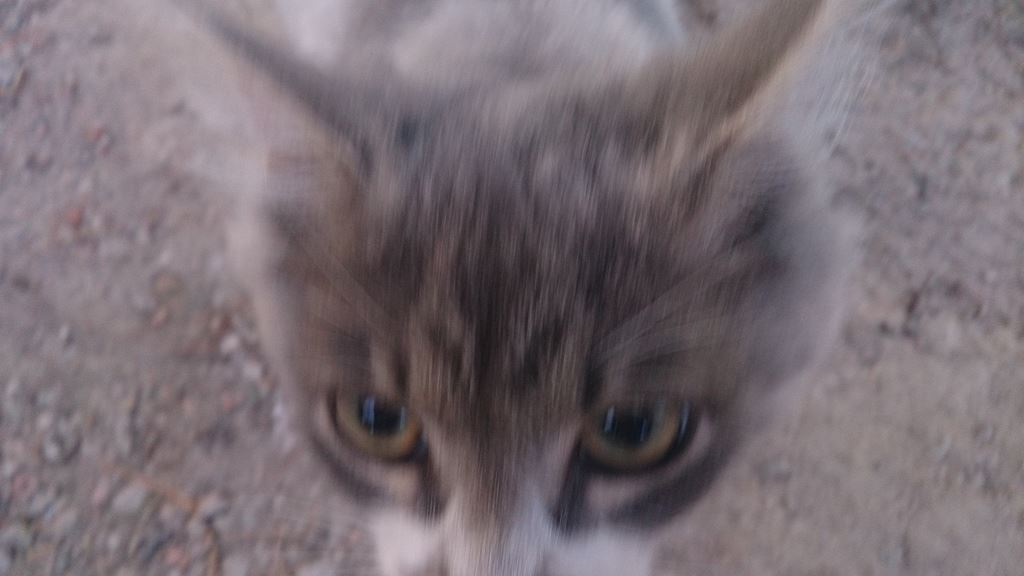 Бездомные кошки рядом с нами