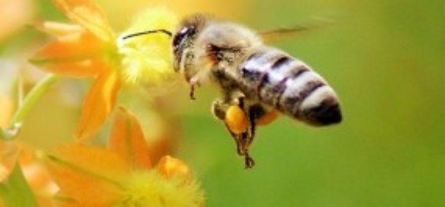 Кооперативы в пчеловодстве  возродят медовую славу России