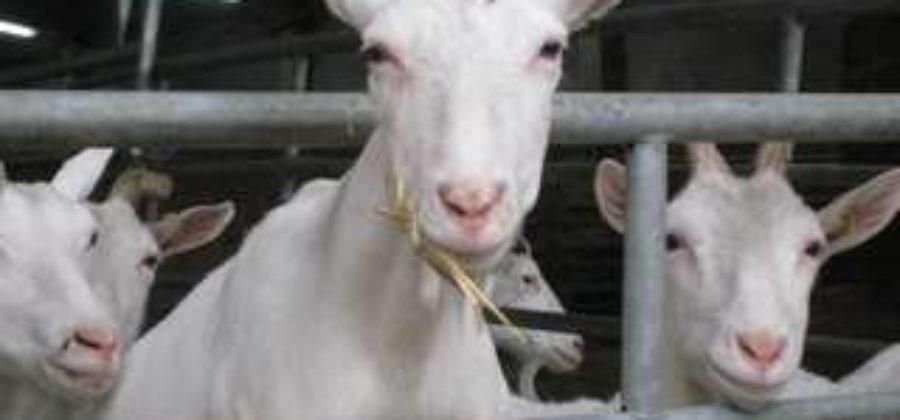 Кооперативы должны увеличить производство молока на селе
