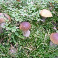Кооперативы по выращиванию грибов-хорошая идея для России