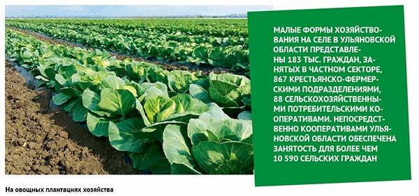 na-ovoshhnyh-plantacziyah-hozyajstv.j