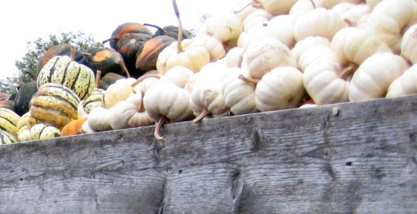 Члены сельскохозяйственных кооперативов-фермеры